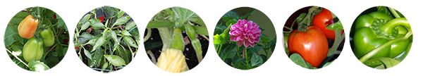 plant-banner.png